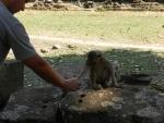 Affen hatte es zum Glueck auch viele :)
