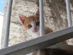 Meine Freunde im Appartement in Dubrovnik :)