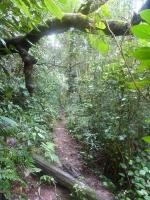 Danach gings ab zum Trekken durch den Regenwald